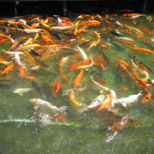 鱼.虾.蟹